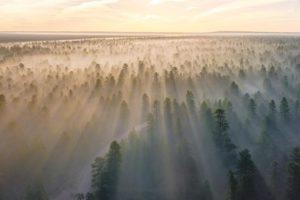 Mist in trees by Chris Lawton